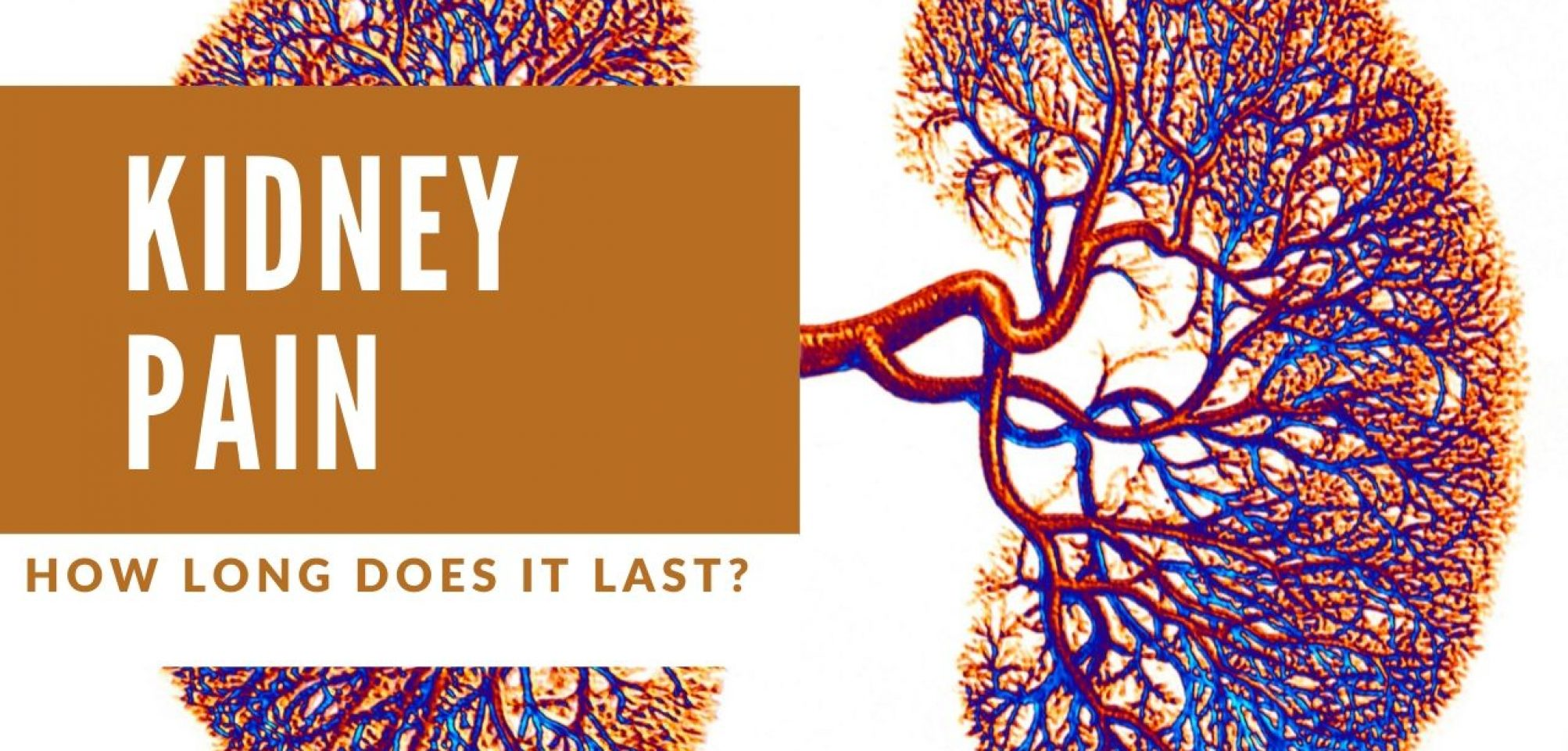 How Long Does Kidney Pain Last Causes Symptoms Healing
